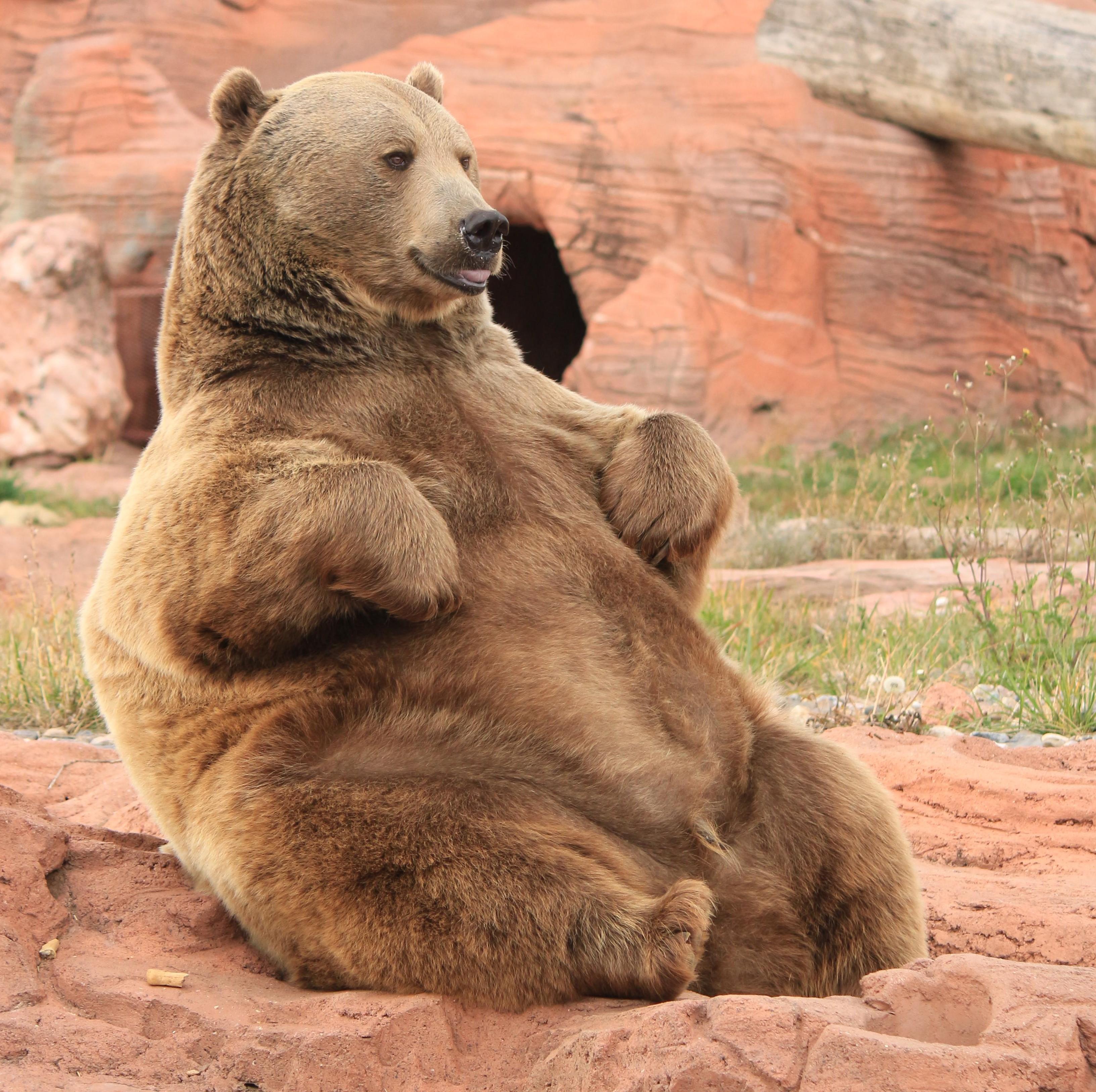 熊もぬるいとこんな感じ?