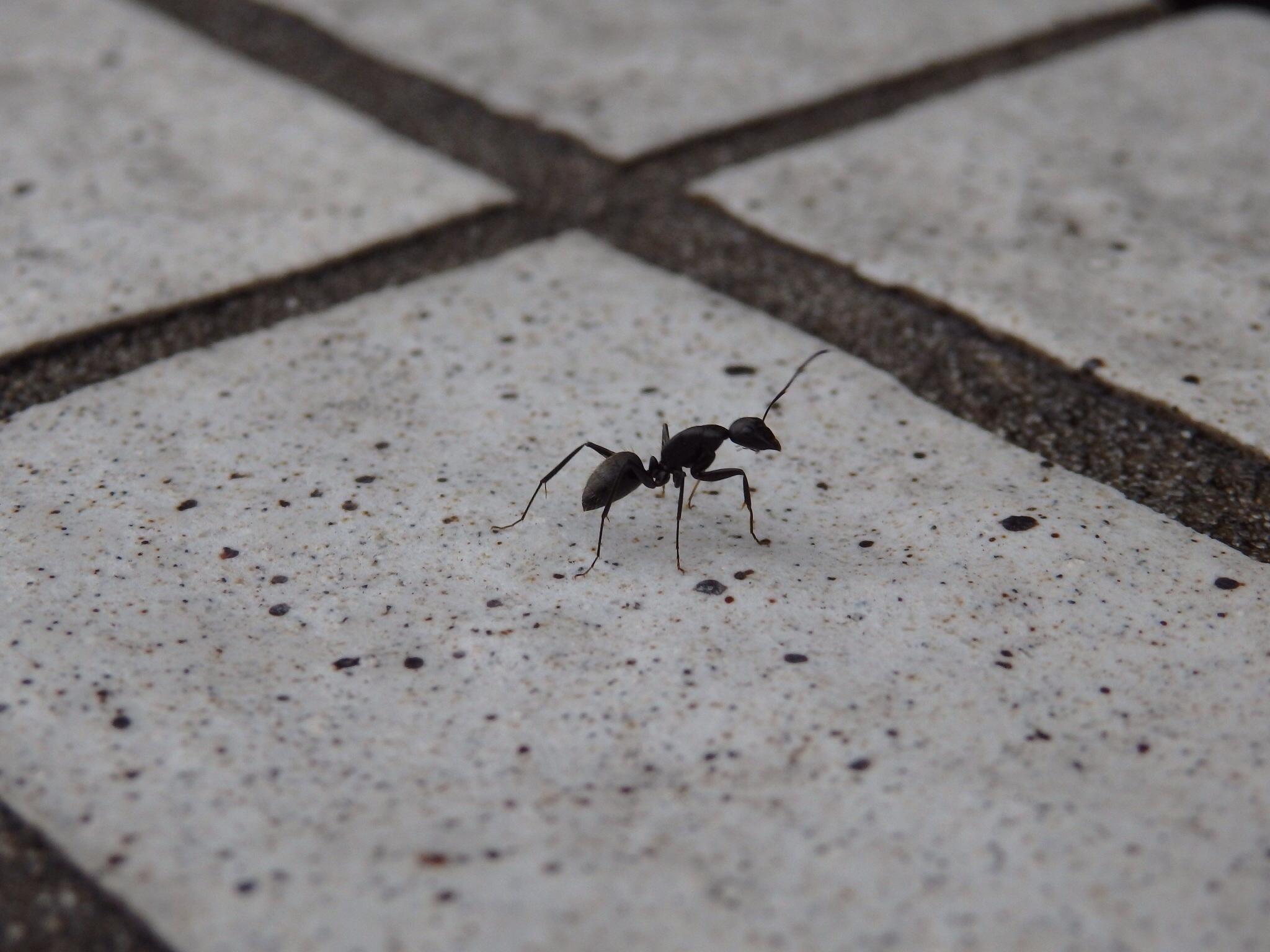蟻さんの不思議@摂理の味