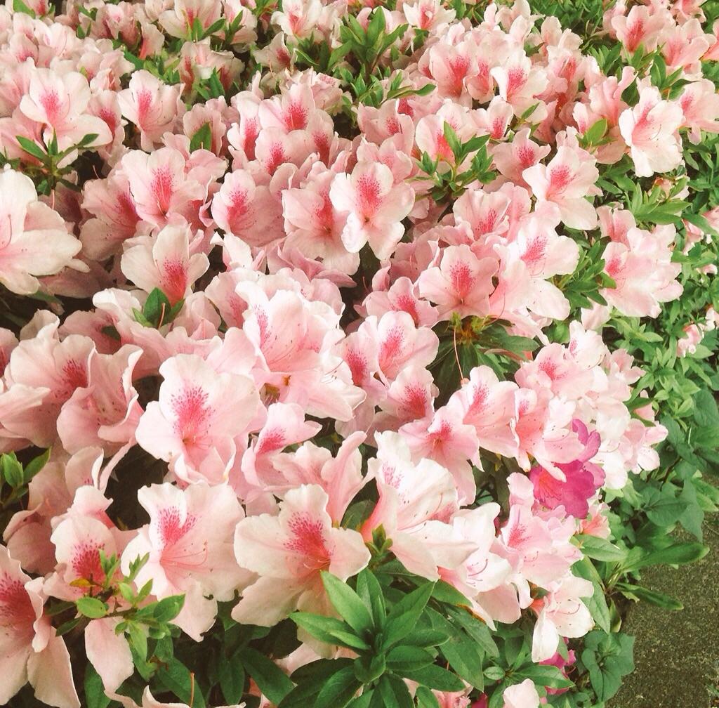 花たちも讃美@摂理の味