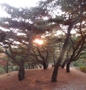 松の木も、証する@摂理の味