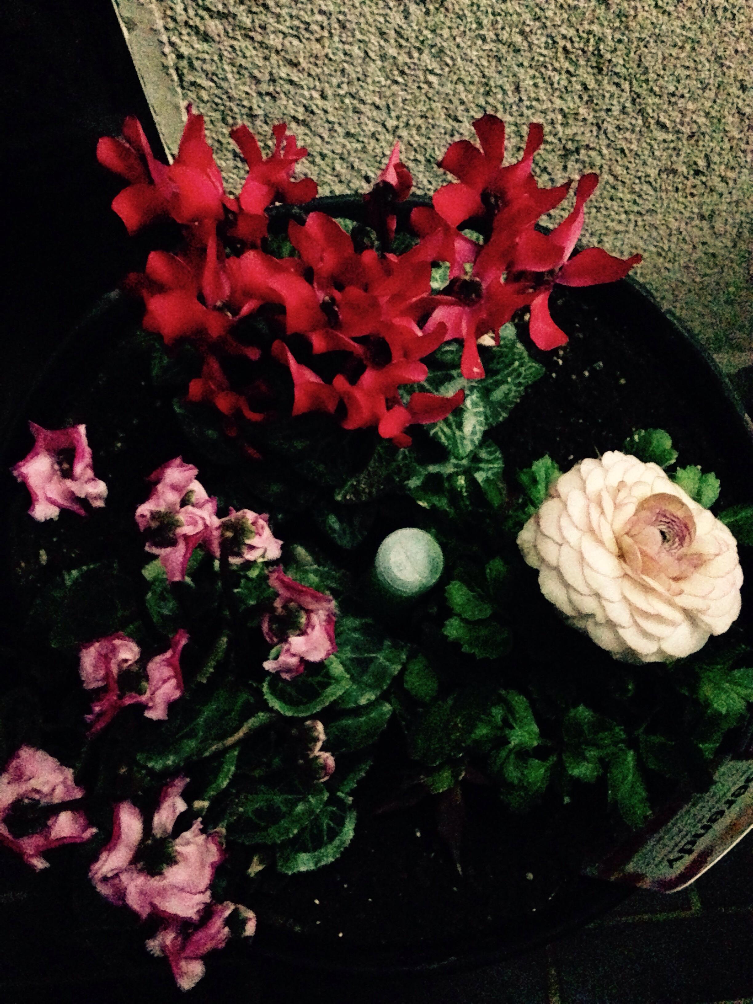 花たちもメリークリスマス!@摂理の味