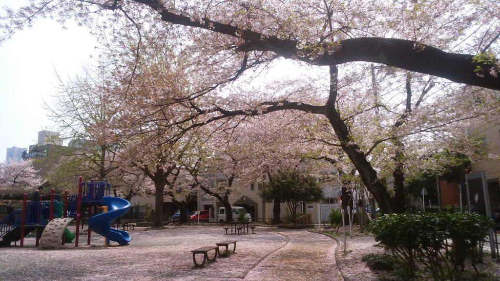桜吹雪@摂理の味