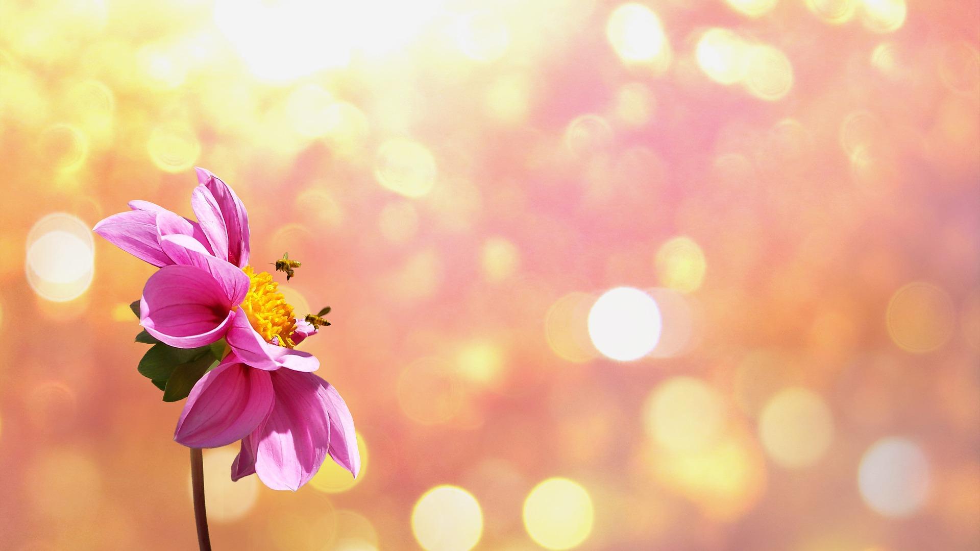 flower-1669899_1920